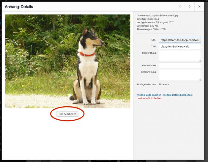 Screenshot WordPress Medien Anhang Seite