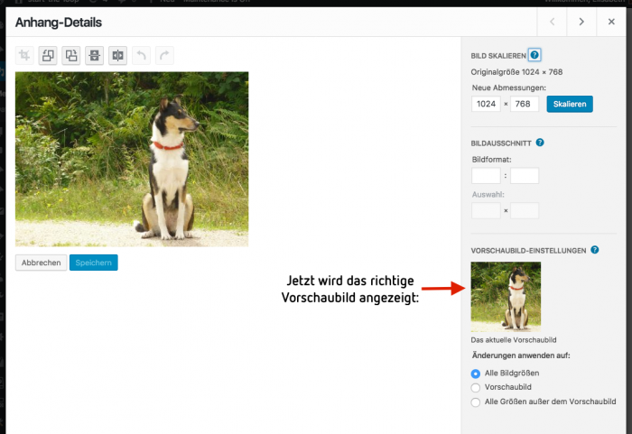 WordPress Medien Anhang-Details neu gespeichertes Vorschaubild